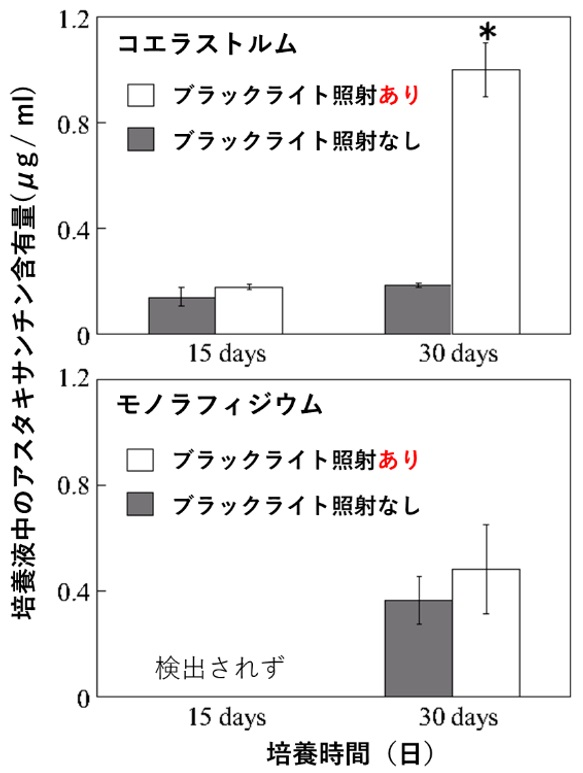 培養液中の微細藻類コエラストルムとモノフィラジウムのアスタキサンチン含有量