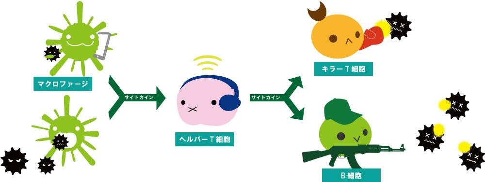 免疫の仕組み
